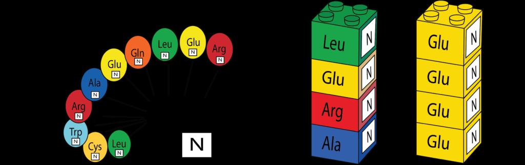 Legos aminoácidos proteguia