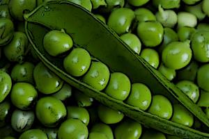 proteinas para veganos de guisante