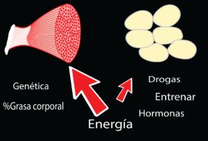 Reparticion de nutrientes