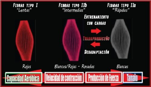 Tipos de fibras cambio y propiedades