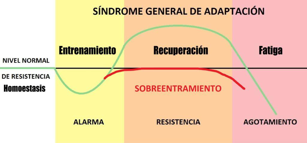 MODELO DE SELYE SOBREENTRENAMIENTO
