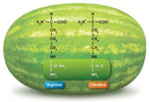sandia oxido nitrico citrulina
