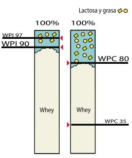 proteina de suero de leche isolada y concentrada
