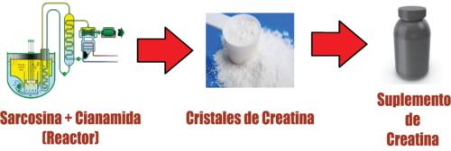 sintesis de creatina