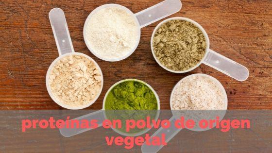 proteinas en polvo de origen vegetal
