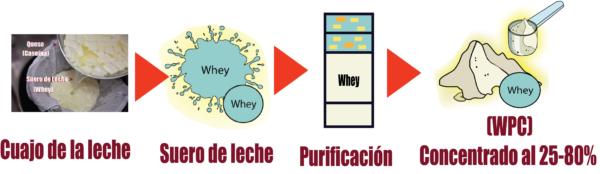 que es la Proteína concentrada de suero