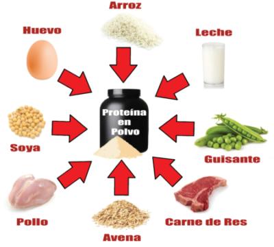 tipos de proteina en polvo