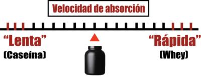 velocidad de absorcion de las proteinas