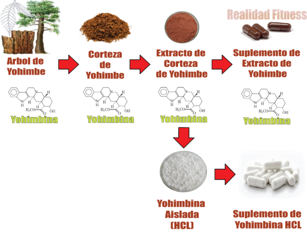 Extracto de Yohimbe y yohimbina
