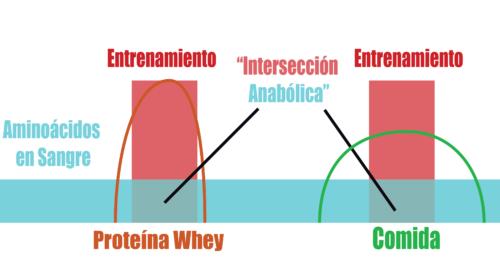 aminoácidos durante el entrenamiento