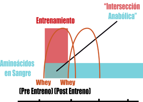 proteina whey antes y despues del entrenamiento