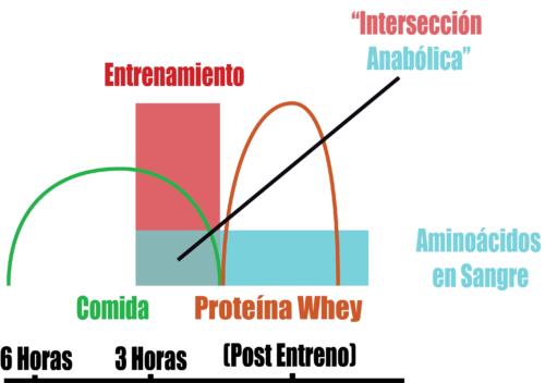 proteina whey después del entrenamiento