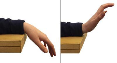 flexion y extension de muñeca