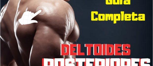 Deltoides posteriores