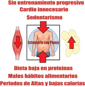 ectomorfo con barriga causas