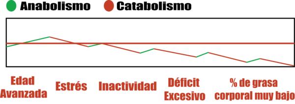 perder masa muscular catabolismo