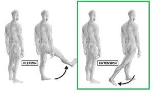 Extension de cadera femoral