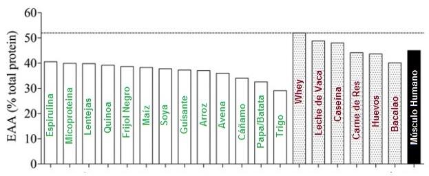 aminoacidos proteina vegetal y animal