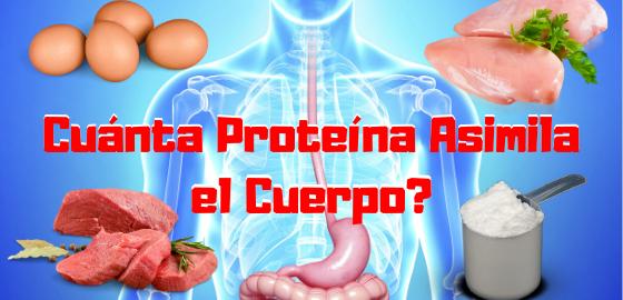 cuanta proteina asimila el cuerpo