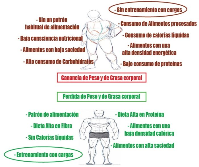 endomorfo perder peso
