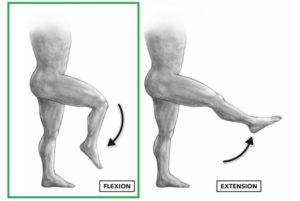 flexion de rodilla femoral
