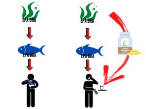 suplementacion con aceite de alga