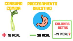 calorías negativas