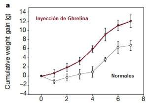 ghrelina efectos