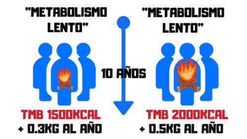 metabolismo lento y rapido