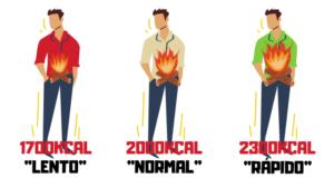 metabolismo rapido y lento diferencias