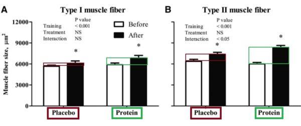 proteina antes de dormir estudio