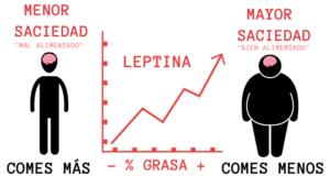 leptina funciones